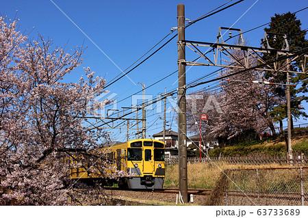 武蔵関駅付近の桜並木を通過する西武線の下り電車(2) 63733689