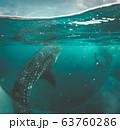 Whale shark watching off the scenic coast of Oslob, Cebu, Philippines 63760286