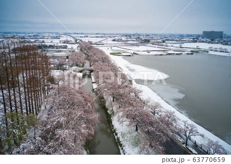 珍しい雪景色の中の美しい満開の伊佐沼の桜 埼玉県川越市(ドローンによる空撮) 63770659