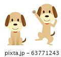犬 ペット お座り ジャンプ ガッツポーズ 63771243
