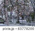 桜に雪が降る 都市 63778200