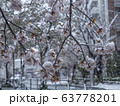 桜に雪が降る 都市 63778201