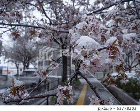 桜に雪が降る 都市 63778203