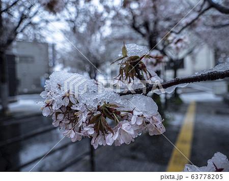 桜に雪が降る 都市 63778205