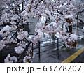 桜に雪が降る 都市 63778207