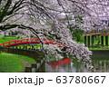 間々田八幡宮の桜 63780667