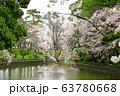 間々田八幡宮の桜 63780668