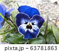 ビオラの花 63781863