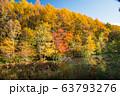晩秋の富士見台高原 63793276