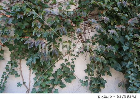 自然のある壁 63799342