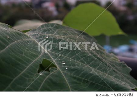 水滴の付いた葉っぱ 63801992