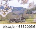 石舞台古墳 春 63820036