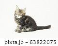 メインクーンの仔猫 63822075