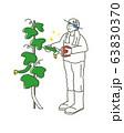 きゅうりを収穫する男の子 イラスト 63830370