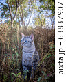 Blue-eyed cat sitting in the grass. 63837907