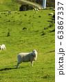 ニュージーランド ウェリントン マカラ 牧場の羊 63867337