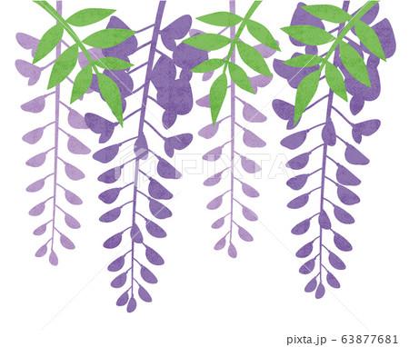 藤の花 63877681