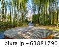 修禅寺 竹林の小径 63881790