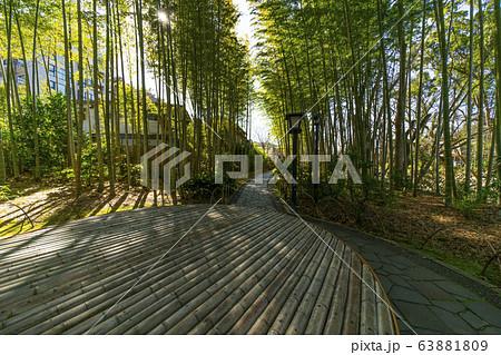 修禅寺 竹林の小径 63881809