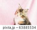 メインクーンの仔猫 63885534