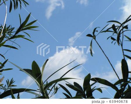 春の青い空と白い雲 63940678