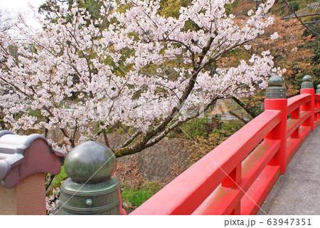 水間公園の桜 63947351