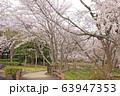水間公園の桜 63947353