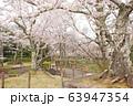 水間公園の桜 63947354