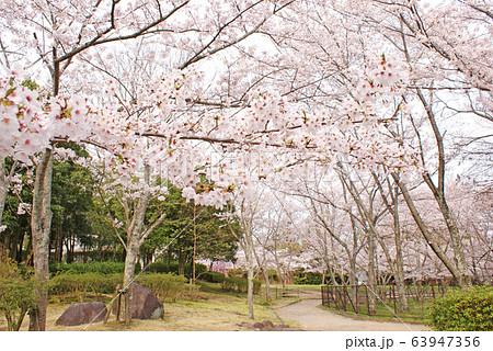 水間公園の桜 63947356