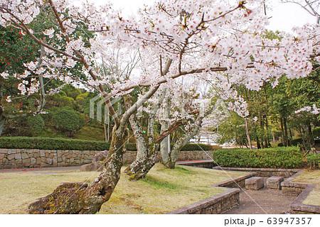 水間公園の桜 63947357