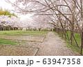 水間公園の桜 63947358