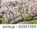 水間公園の桜 63947369