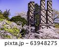 【静岡県】満開の桜に包まれた、韮山反射炉 63948275