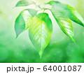 新緑 64001087