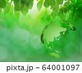 新緑(背景素材) 64001097