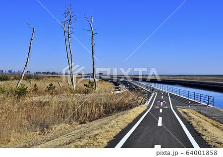 貞山運河土手の仙台亘理自転車道の横に大津波で立ち枯れた松の木 64001858