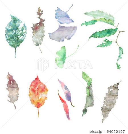 水彩で描いた色とりどりの落ち葉のセット 64020197