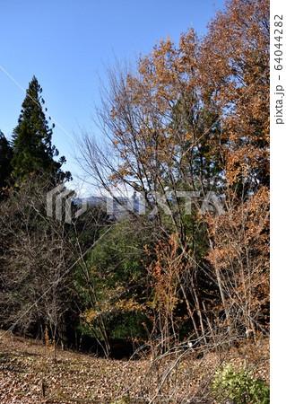 冬の秩父ミューズパーク 昆虫の森 64044282