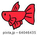 メスベタ(赤色) 64046435