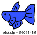 メスベタ(青色) 64046436