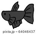 メスベタ(黒色) 64046437