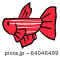拒否線のあるメスベタ(赤色) 64046499