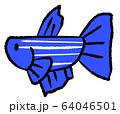 拒否線のあるメスベタ(青色) 64046501