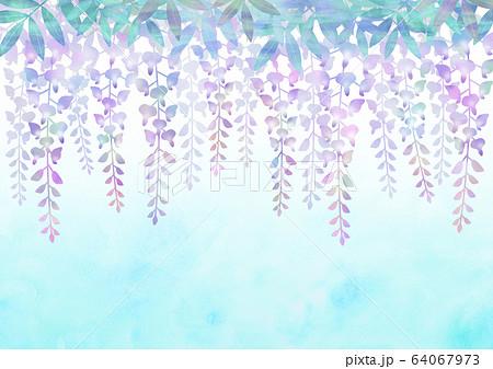 藤の花 64067973