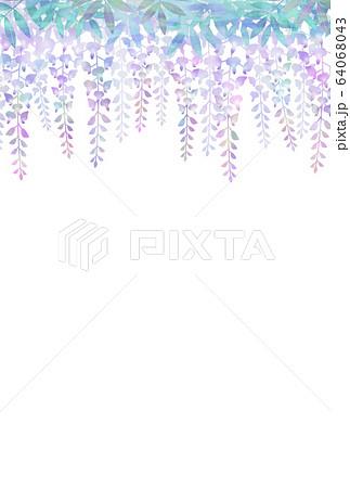 藤の花 64068043