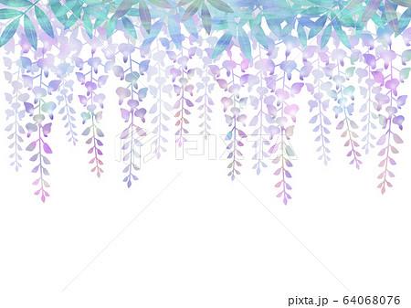 藤の花 64068076