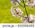 おの桜づつみ回廊 64098489