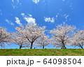 おの桜づつみ回廊 64098504