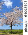 おの桜づつみ回廊 64098505