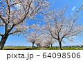 おの桜づつみ回廊 64098506